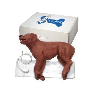 CasPeR, der HLW-Hund